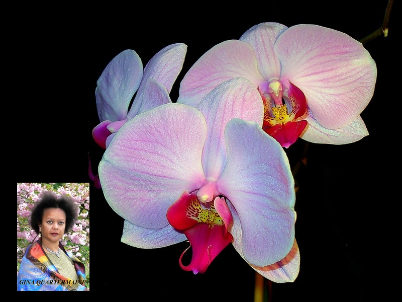 My Orchids by Gina Quartermaine GinaQuartermaine.com